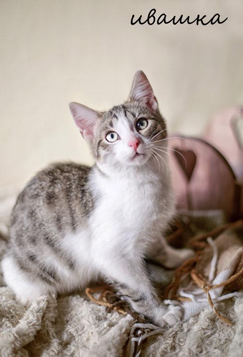 Раздам тплых, уютных котят