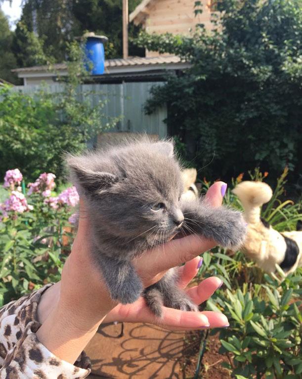 Крошечные котята срочно ищут дом