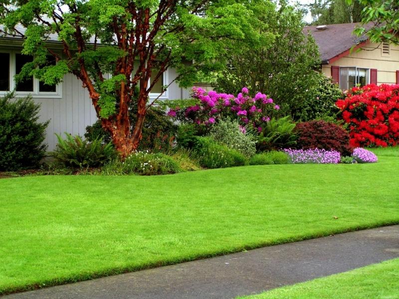 Травосмеси и газонные травы от Агроальянс Плюс