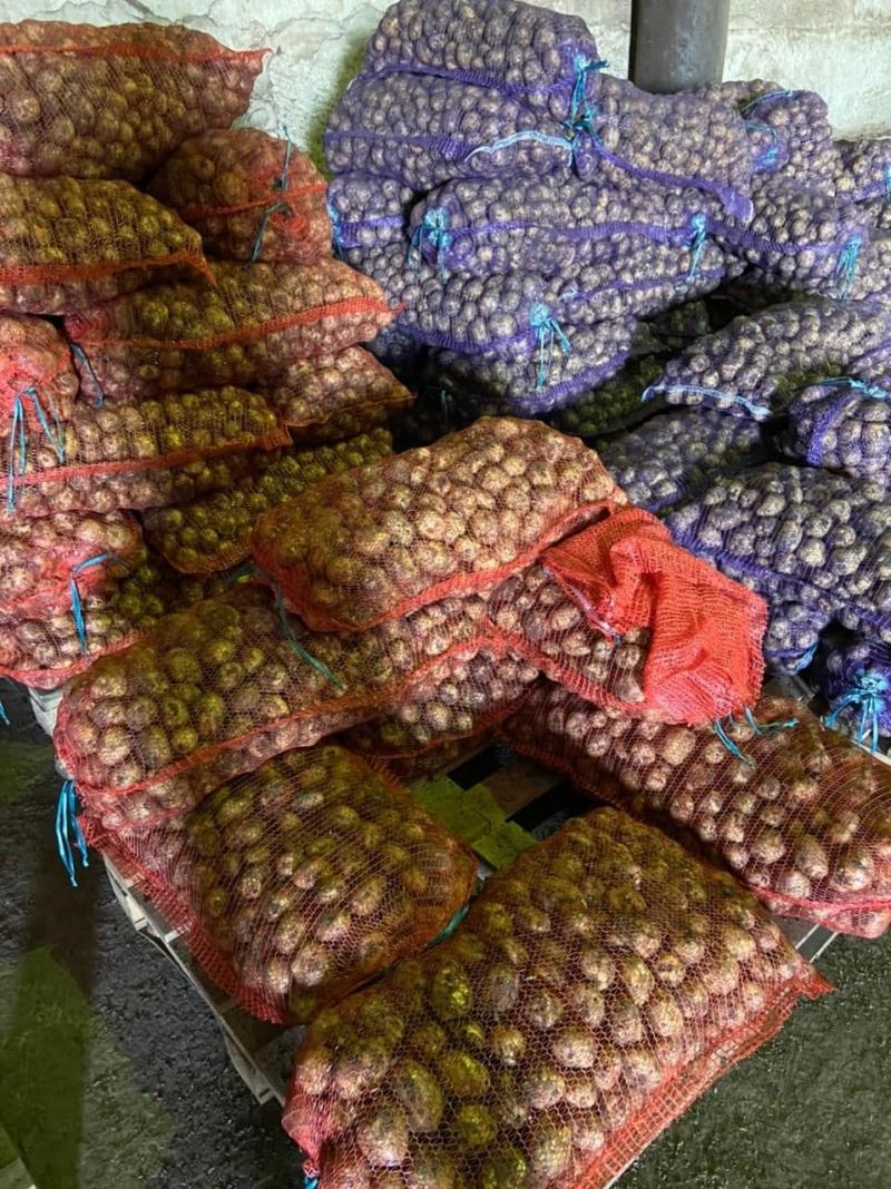 Картофель молодой оптом, урожай 2021